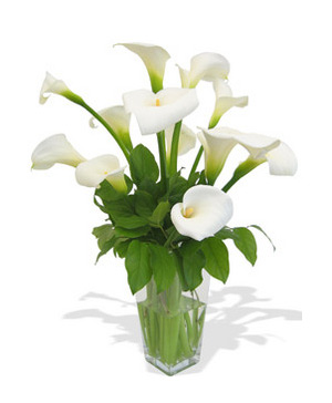 white callas lily, delivery in China