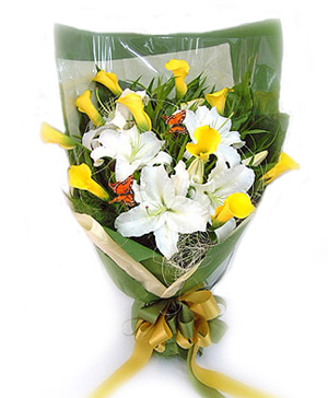 Alive Calla Lilies