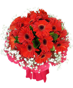 Send Flower China | Red Gerbera Bouquet