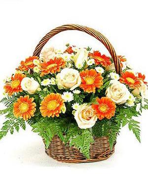 Gerbera Roses Basket